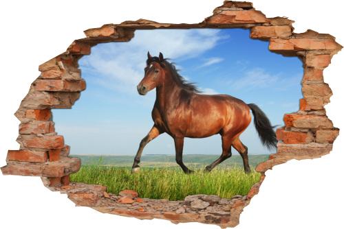 3D Wand-Aufkleber Wand-Bild Wand-Tattoo Wand-Sticker Wand-Durchbruch Pferde-Bilder auf-der-Wiese Tiere Deko Raum-Gestaltung